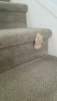Theodore, the hamster, climbs up the stairs - Niedliche tiere - # - Animals - tierbabys Cute Little Animals, Cute Funny Animals, Funny Cute, Cute Cats, Adorable Kittens, Funny Birds, Funny Hamsters, Robo Dwarf Hamsters, Cute Animal Videos