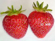 Jahoda - 'Honeoye' - Ovocná škôlka - STAPE VAJDA s.r.o. Strawberry, Fruit, Food, Essen, Strawberry Fruit, Meals, Strawberries, Yemek, Eten