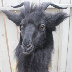 Realistic Goat Mask made with synthetic materials. Fully wearable with vision ports on the snout before the eyes. Goat Mask, Body Drawing Tutorial, Creepy Vintage, Satanic Art, Trash Art, Evil Clowns, Cool Masks, Animal Masks, Animal Sketches