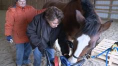 Harmony Acres horses helping to heal disabilities