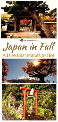 With gorgeous golden foliage cool and comfortable temperatures Autumn in Japan may be the perfect time to visit. There's plenty to see and do. Find out all about Fall in Japan by clicking here. Japan Travel Guide, Asia Travel, Travel Guides, Tokyo Travel, Nara, Cool Places To Visit, Places To Go, Visit Japan, Family Travel