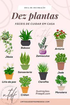 Eco Garden, Home Vegetable Garden, Garden Care, Garden Trees, Hanging Herbs, Little Gardens, Garden Terrarium, Bedroom Plants, Little Plants