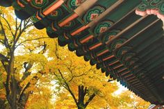 30 Photos That Prove the South Korea Autumn Just Won at Life Autumn In Korea, Yellow Tree, Jeju Island, Hidden Beach, Photo Essay, Fall Photos, Color Stories, American Idol, Perfect Photo