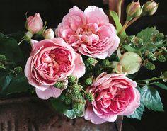 wild blackberries + open roses = one happy bouquet Beautiful Roses, Pretty In Pink, Beautiful Flowers, Pretty Roses, Beautiful Things, My Flower, Flower Power, Flower Ideas, Open Rose