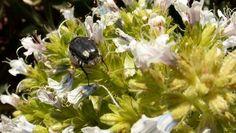 Estudios de Flora y fauna