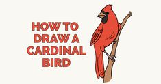Learn to draw a cardinal bird. This step-by-step tutorial makes it easy. Kids and beginners alike can now draw a great looking cardinal. Bird Drawings, Easy Drawings, Animal Drawings, Cardinal Drawing, Batman Drawing, Drawing Tutorials For Beginners, Drawing Lessons, Drawing Ideas, Drawing Tips