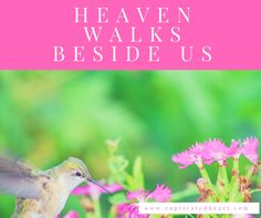 Heaven Walks Beside Us | from Captivated Heart, Chayla Baer