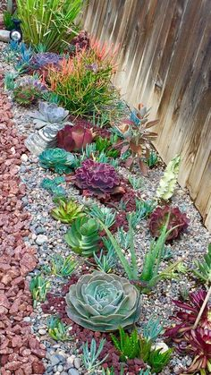 mix of succulents for a low water garden in full sun. Great colors, forma and texture keep it interesting.Great mix of succulents for a low water garden in full sun. Great colors, forma and texture keep it interesting. Succulent Landscaping, Succulent Gardening, Cacti And Succulents, Front Yard Landscaping, Landscaping Ideas, Organic Gardening, Backyard Ideas, Succulent Rock Garden, Mulch Landscaping