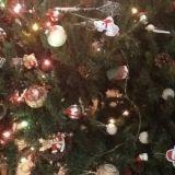 """#Concorso #GreenMarathonTappa 5 #Natale #Green Paolo: """"Il nostro albero di natale ci fa compagnia da 15 anni e non ho dovuto levare al bosco nessun abete"""""""