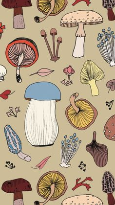 Earthy mushroom surface pattern