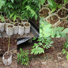 Nursery Pots Seedling-Raising Bags 8*10cm fabrics Garden Supplies Environmental Protection Full All Size 100pcs-pack