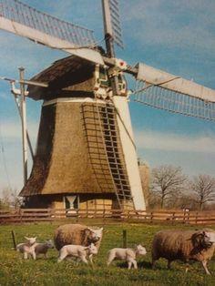 #windmill#holland#