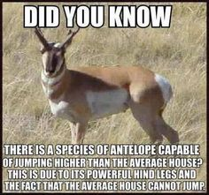 """""""This is due to its powerful hind legs and the fact that the average house cannot jump."""""""