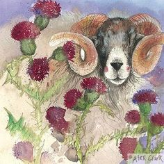 Greeting card from a painting by Alex Clark. 140 x with brown craft paper envelope. Published by Alex Clark. Sheep Art, Clark Art, Naive Art, Whimsical Art, Artist Art, Art Forms, Pet Birds, Illustrators, Watercolor Paintings