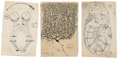 """The illustrations of Santiago Ramón y Cajal, the father of modern neuroscience, are featured in the new book """"The Beautiful Mind. Ramones, Weisman Art Museum, Cerebral Cortex, Crisp Image, World Pictures, Beautiful Mind, Vincent Van Gogh, Ny Times, Vintage World Maps"""