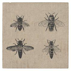 Shop Bees Illustration Antique Bee Art Vintage Design Stone Coaster created by Vintage_Antique_Art. Art Vintage, Antique Art, Vintage Designs, Bee Illustration, Antique Illustration, Clip Art, Bee Art, Bee Design, Stone Coasters