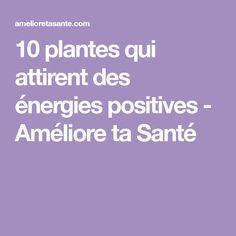 10 plantes qui attirent des énergies positives - Améliore ta Santé