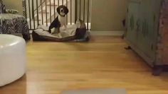 Trick Training Session #2: On Your Mat. My southern bell is crushing it!!!! #southernbelle #goodjob #yes #clickingfortreats #trainingisfun #phlpets #lovedogs #libertybell
