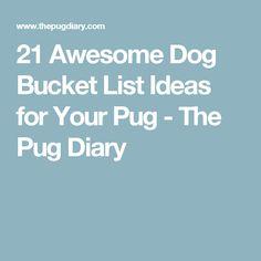 21 Awesome Dog Bucket List Ideas for Your Pug - The Pug Diary