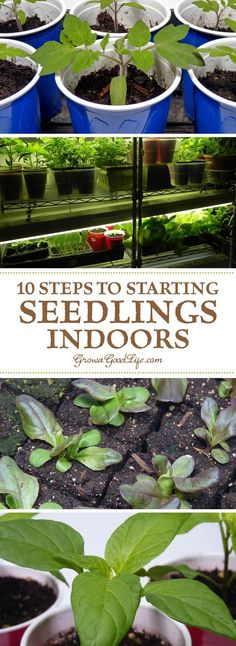 Growing your own garden transplants from seed offers you more flexibly and control over your vegetables, herbs, and fruit. You can choose your favorite varieties, grow the number of plants you need, and work within the planting dates that suit your growin