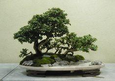 breathtaking bonsai landscapes / penjing. so inspiring!