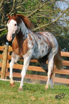 """ An Equine American Paint Horse. All The Pretty Horses, Beautiful Horses, Animals Beautiful, American Paint Horse, Quarter Horses, Clydesdale, Little Poney, Painted Pony, Pets"