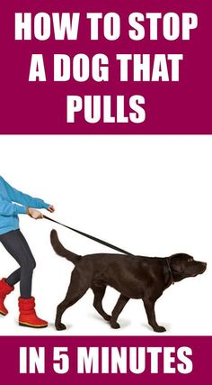 Walking nicely on a leash is not an instinctive behavior. Use these simple tips . - For the animals - training The Animals, Amazing Animals, Easiest Dogs To Train, Maila, Dog Training Tips, Training Classes, Agility Training, Training Videos, Training Academy