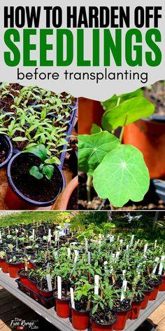 Hydroponic Gardening, Organic Gardening, Gardening Tips, Gardening Direct, Hydroponics, Container Gardening, Planting Vegetables, Organic Vegetables, Kew Gardens