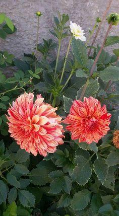 Mis flores del jardin