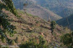Deforestation Laos