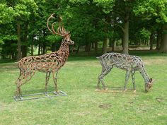 Gorgeous Horseshoe deer stag and doe by Tom Hill