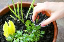 How to Keep Bugs Off Vegetables in a Garden | eHow