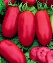 San Marzano Tomatoes: a plum tomato and household name when it comes to making homemade tomato sauce