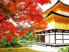 Golden Pavilion Kinkakuji in fall, Kyoto, Japan Kumamoto, Kyushu, Ginkakuji, Japanese Temple, Visit Japan, Kyoto Japan, Hiroshima Japan, Adventure Is Out There, Japanese Culture