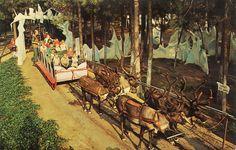 The Candy Cane Sleigh Ride and Santa's Beautiful Reindeer at Santa's Village in Sky Forest, San Bernardino County, CA. Miss California, California Mountains, Vintage California, Reindeer And Sleigh, Real Reindeer, Scotts Valley, Santa's Village, San Bernardino County, Santa Pictures