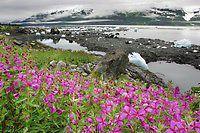 Prince William Sound - Images | AlaskaPhotoGraphics.com