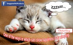 One of the ways in which cats show happiness is by sleeping. -Cleveland Amory  #cat #kitten #playful #quotes #loving #sweet #fun #cute http://doggonepetproducts.com/