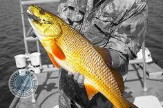 I'm not talking Halloween festivities. It's time you learned what sight fishing Louisiana redfish is all about. Salt Water Fish, Salt And Water, Fresh Water, Going Fishing, Fishing Tips, Crappie Jigs, Bay Boats, Trolling Motor