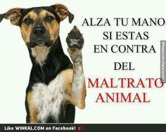 Yo estoy contra el trato animal