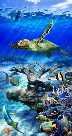 <br> A traveling sea turtle surveys the local fish and sea life as it glides gracefully across a coral reef. Enjoy the relaxing beauty and colors of underwater life with a Sea Turtle Reef giclee print for glass decorating your glass door or window. Underwater Tattoo, Underwater Painting, Underwater Life, Baby Sea Turtles, Sea Turtle Art, Sea Turtle Painting, Tier Wallpaper, Nature Wallpaper, Plain Wallpaper