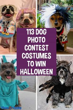113 Dog Photo Contest Costumes To Win Halloween - Fidose of Reality Cute Dog Halloween Costumes, Clever Costumes, Diy Dog Costumes, Halloween Photos, Dog Photo Contest, Scary Dogs, Clever Dog, Group Of Dogs, Dog Photos