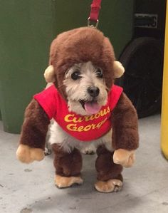 And the winner is.... Ally!! Another fun day at Cousin Corporation of America Not only is it FriYAY, but it is also dog day AND dog costume day, does it get any better? Shout out to our 3 judges, what a tough decision they had! So many dogs... SO much cuteness!! #cousincorp #cousindiy #laurajanelle #halloween #dogday #bestjudges #cutestdogs #costumes #friyay #curiousgeorge #hotdogcostume #devilandangel #glowinthedark #creative #somanycostumes