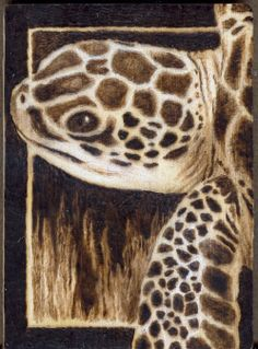 heres another aceo size woodburning on birch turtle woodburning Wood Burning Stencils, Wood Burning Crafts, Wood Burning Patterns, Wood Burning Art, Wood Crafts, Pyrography Patterns, Pyrography Ideas, Small Wood Projects, Turtle Painting