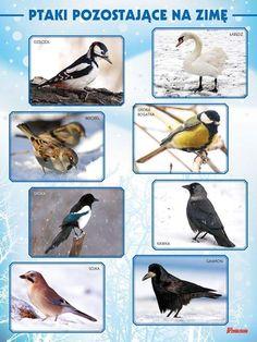 Montessori Education, Montessori Classroom, Games For Kids, Diy For Kids, Activities For Kids, Feeding Birds In Winter, Polish Language, Learning Time, Nursery School