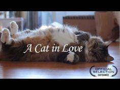 A Cat In Love:) Sen benim olsanaaaa! Ben unuttururum sana Momoko'yu :)