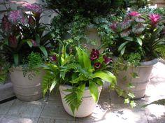 Urban Tropical Garden - tropical - landscape - new york - r.a.nelson-plantsman