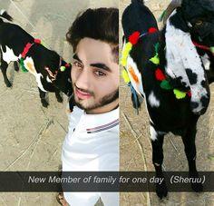 Advance bakra eid Mubarik with sheruu