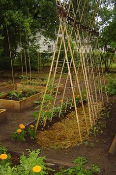 Whole Garden of Seeds for super affordable pricing two increments 75 seed packs or 30 seed packs.