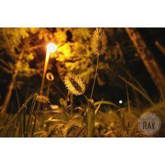 Instagram【rayyyyyri】さんの写真をピンしています。 《素人の素人感😭 街灯宿敵。 蚊も宿敵😢 レンズフィルター使ったことないけど近いうち見てみよう... 時間に押されると設定も頭の中こんがらがって、構図ももっとよく撮れたであろう残念感😢 1日フルで写真撮りにいきたいー\(◎o◎)/ ・ ・ #夜景#camera#canon#picture#カメラ#パパ#二児のパパ#写真#写真撮ってる人と繋がりたい#写真好きな人と繋がりたい#一眼レフ#一眼#キャノン#フォト#街灯#すすき#秋#autumn#like#ファインダー越しの私の世界》