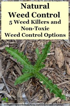 Natural Weed Control - Homemade weed killers including vinegar weed killer spray and other organic weed control options that are safe for kids and pets.